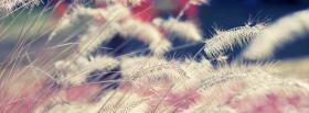 free wheat soft nature facebook cover