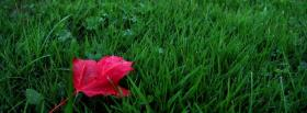 free red leaf nature facebook cover