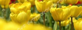 free yellow garden nature facebook cover