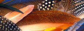 free feathers nature facebook cover