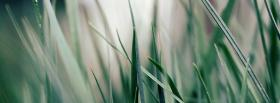 free grass nature facebook cover