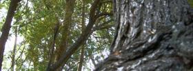 free sticky tree nature facebook cover