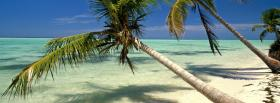 free tilted palm trees nature facebook cover