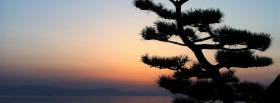 free tree and clear sky nature facebook cover