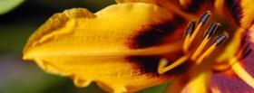 free yellow orange flower nature facebook cover