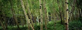 free birch forest nature facebook cover