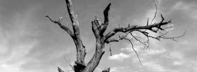 dead tree facebook cover