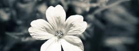 white cute flower facebook cover