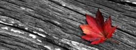 free maple leaf facebook cover