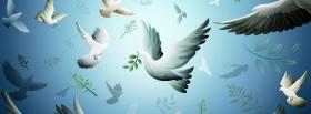 free white doves creative facebook cover