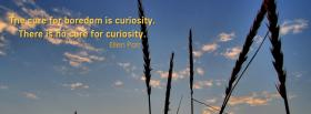 free no cure for curiosity facebook cover