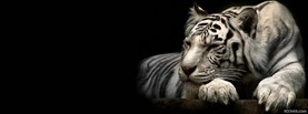 free White Tiger facebook cover