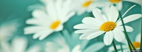 free White Flowers  facebook cover